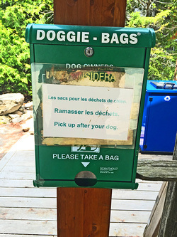 Dog friendly in Tobermory Ontario
