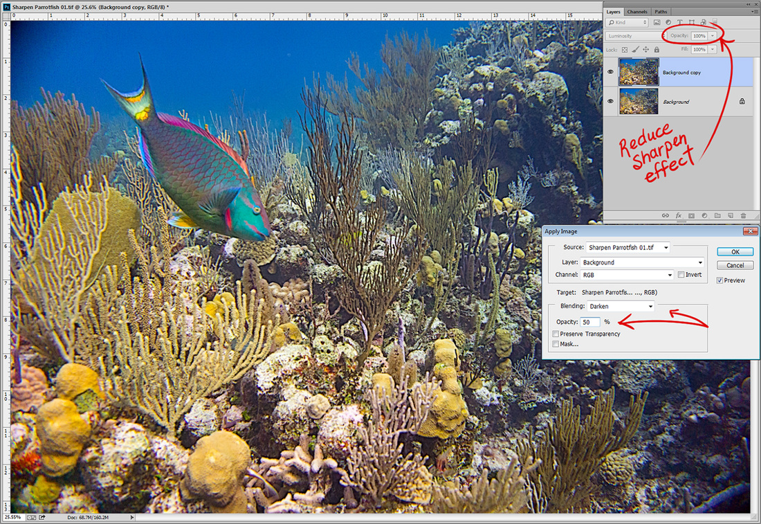 Photoshop and Underwater photography